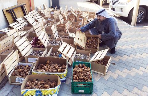 kuwait-truffles