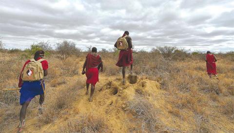 "KIMANA, Kenyan: Kenyan Maasai ""Morans"" (warrior) track lions on foot through a patch of scrub, at the Selenkay community conservancy."